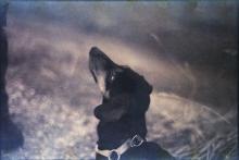 cane-colpevole-bassotto